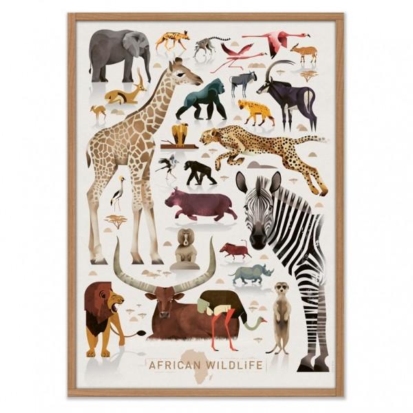 African Wildlife, Dieter Braun