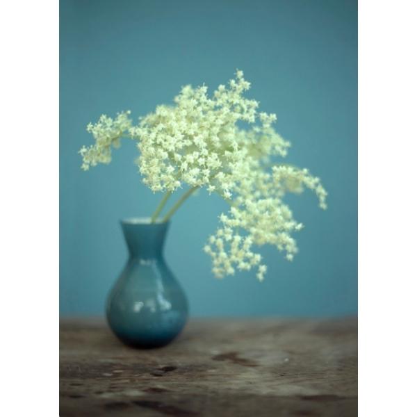 Vase Holunder Naturfotografie